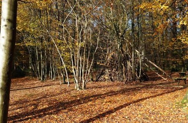 Arboretum du Bois Collignon