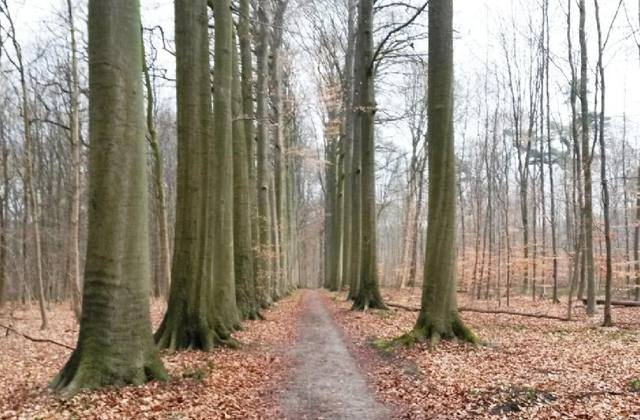 La forêt de Meerdaal